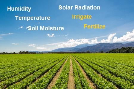 53313775 – fertile agricultural field of organic crops in california